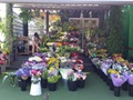 Under Offer - Under Management Florist Business For Sale Melbourne