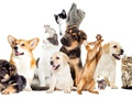 Established & Well-Known Pet Care Business