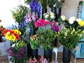 Thriving in COVID-19 Florist in Somerville