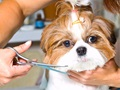 Dog and Cat Grooming Business For Sale South East