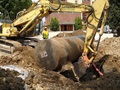 Excavation and Tank Removal