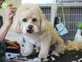 Pet Grooming Business for Sale - Bergen County, NJ