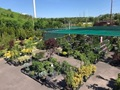 Award Winning Nursery/Garden Center for sale in NY