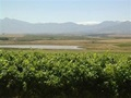 Paarl Wine Estate Cape Wine Lands For Sale