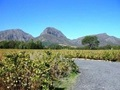 Boutique Paarl Winery For Sale