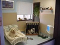 Dog Day Care Boarding And Training Business For Sale