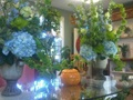 High End Floral And Plant Shop For Sale, Well Established. Steady Clientel