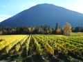 Successful 10 Acre Winery For Sale, Shuswap, British Columbia, Canada