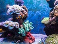 Aquarium and Exotic Fish Store For Sale