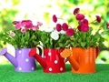 Long Established Nursery Garden Centre Business For Sale