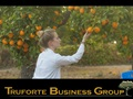 Established Citrus Farm and Store For Sale